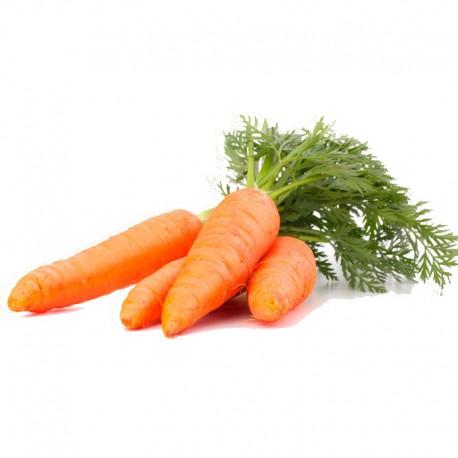 Zanahoria (u)