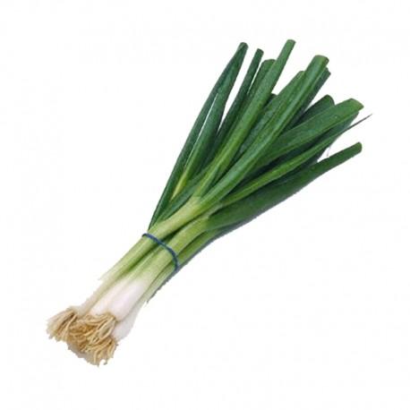 Cebolla Larga  (u)